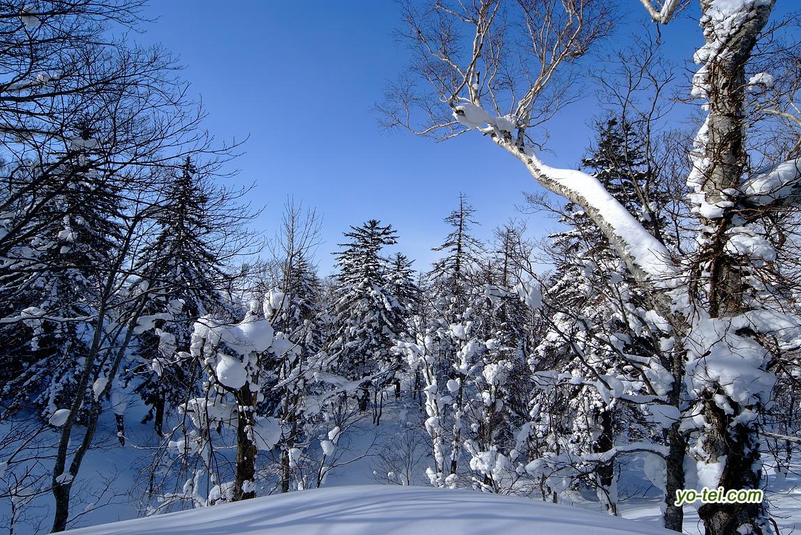 冬の羊蹄山~比羅夫側2合目から5合目付近