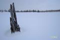 雪原と枯れ木