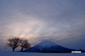 さえない朝焼け~サクランボの木と羊蹄山