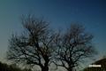 月夜のサクランボの木と春の大曲線