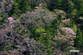 新緑・春紅葉・山桜の湖畔