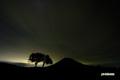 サクランボの木と羊蹄山~シルエット