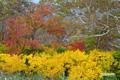 木道沿いの紅葉
