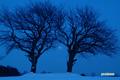 月食~サクランボの木
