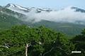 ダケカンバと目国内岳(左)・岩内岳