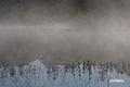 朝霧の神仙沼