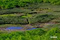 パンケ目国内湿原