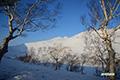 ダケカンバ・シャクナゲ岳