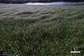 陽の出前の神仙沼湿原