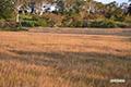 秋色の湿原