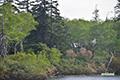 新緑の神仙沼