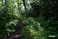 木洩れ日の鏡沼登山道