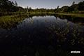 月明かりの神仙沼