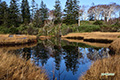 晩秋の神仙沼湿原