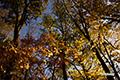 紅葉の半月湖遊歩道